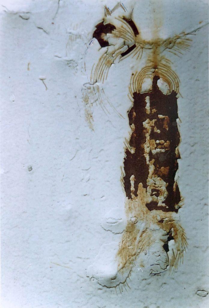 """Regine Schirmer, """"Getüm"""", Fotografie, 20 x 30 cm, 370 EUR"""