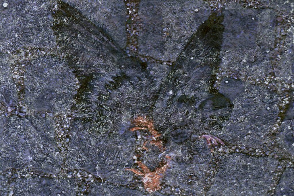 """Karl Forster, """"Friedenstaube 2020"""", Pigmentfarben-Handübertragung, ca. 48 x 33 cm im Rahmen 63 x 53 cm, Passepartout Schrägschnitt, h'grau, 630 € inkl. Rahmen"""