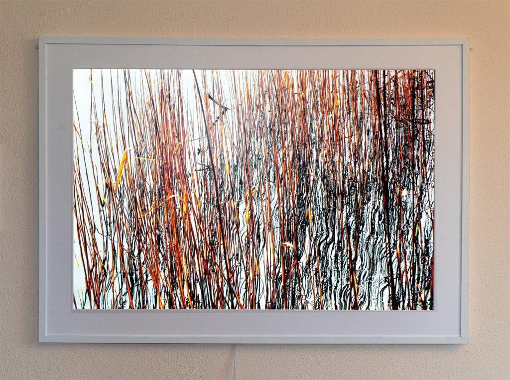 """Bernd Scheffer, """"Schilf (Olchinger See)"""", Transparenter Fotodruck, LED-Hintergrundbeleuchtung (dimmbar), 120 x 87 x 2,5 cm, 580 € inkl. Rahmen"""